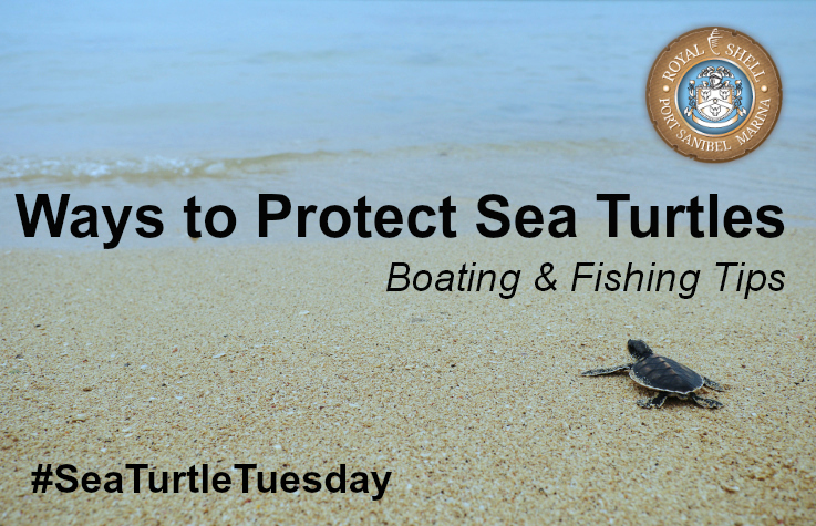 Ways To Protect Sea Turtles Boating Amp Fishing Tips