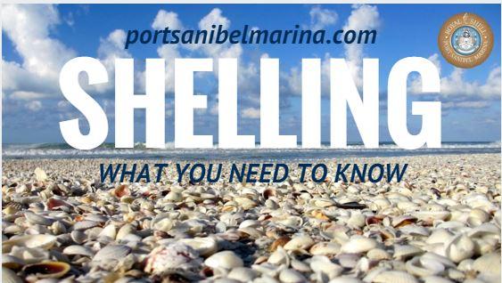 Shelling On Sanibel Island