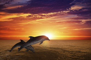 Jumping dolphins off Sanibel Island