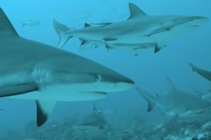 shark week sharks photo