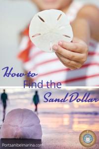 Port Sanibel Sand Dollar Pinterest Pin