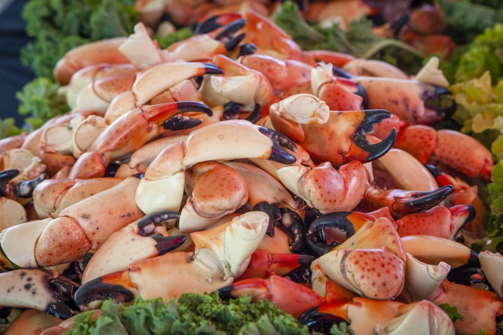 Florida stone crab season