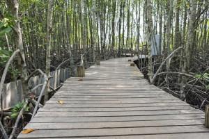 Sanibel mangrove ecosystem