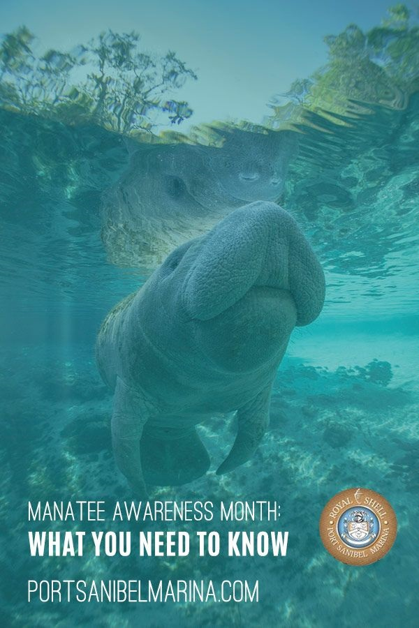 manatee awareness month image