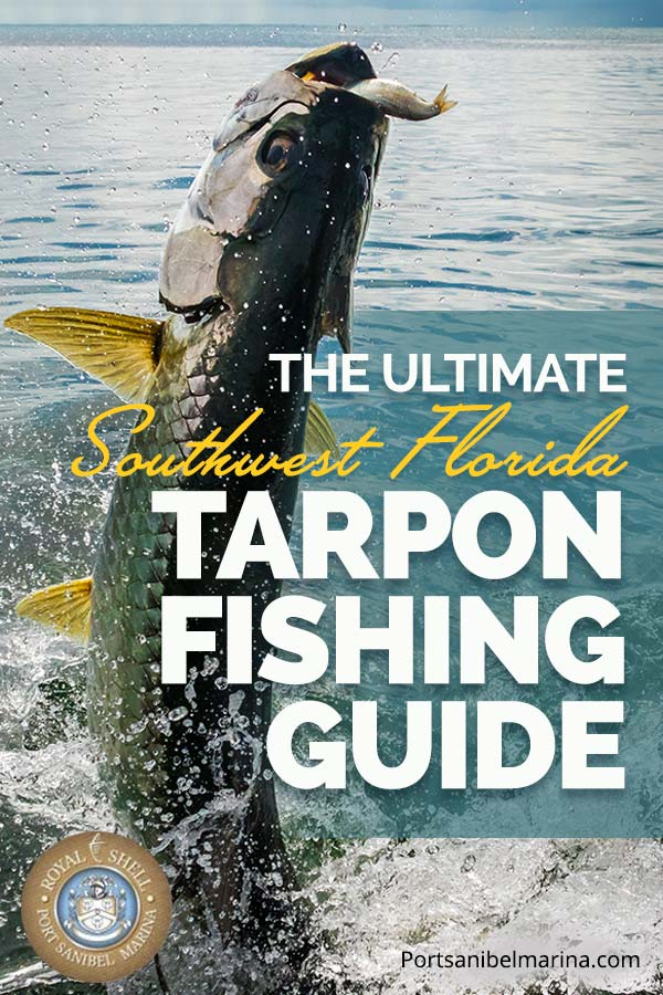 florida tarpon fishing guide