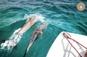 Florida boating with dolphins