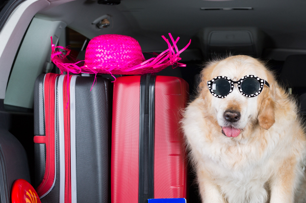 A Pet Friendly Guide to Sanibel Island