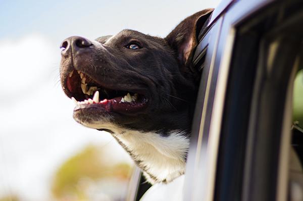 Are Dogs Allowed on Sanibel Island?